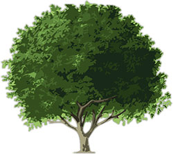 Simple Clipart Of A Walnut Tree.