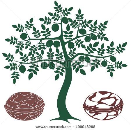 Walnut Tree Stock Images, Royalty.