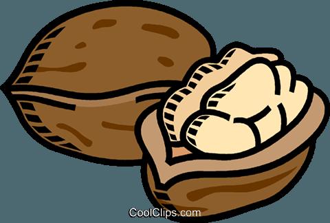 walnuts Royalty Free Vector Clip Art illustration.