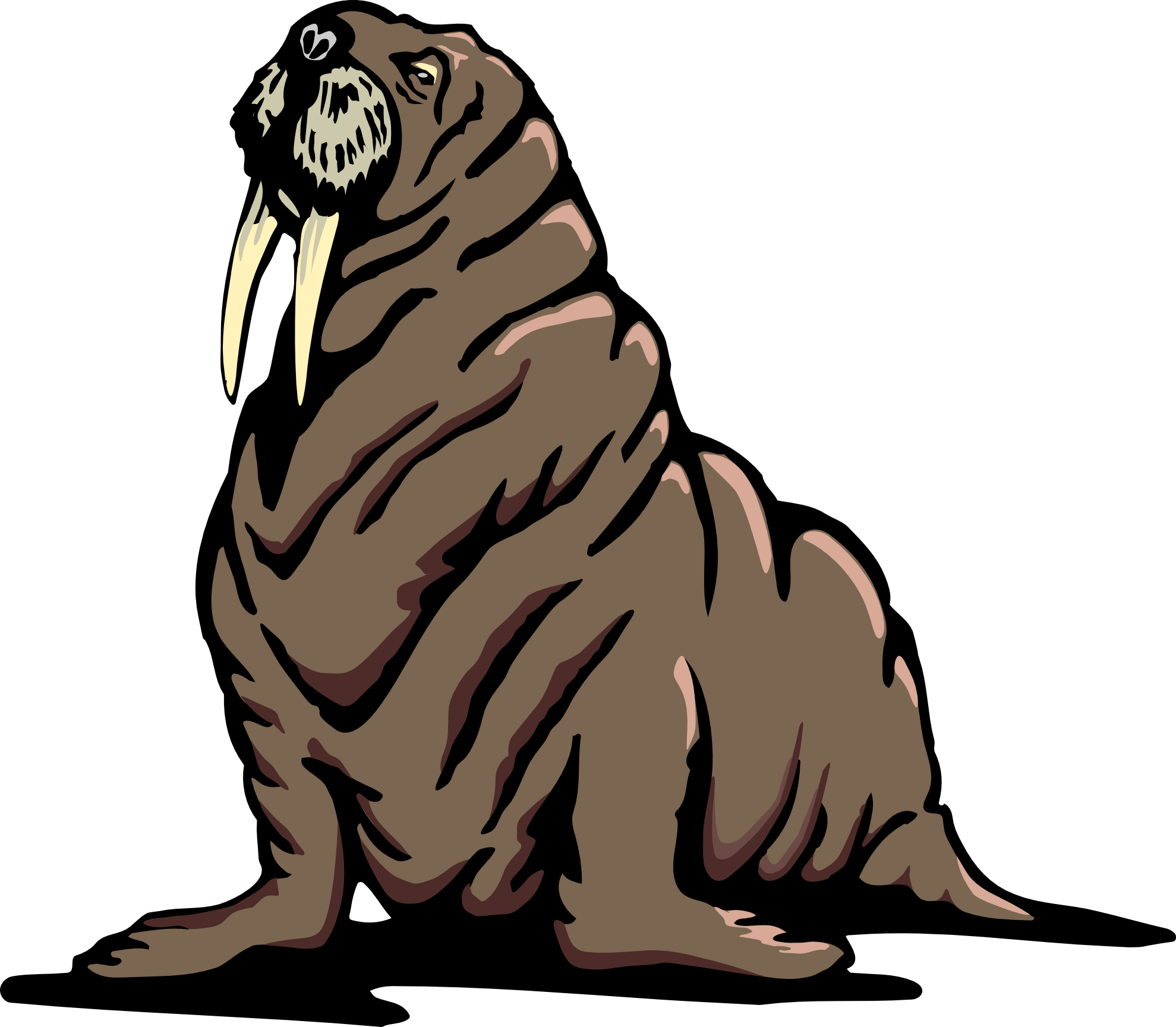 Free Walrus Cliparts, Download Free Clip Art, Free Clip Art on.