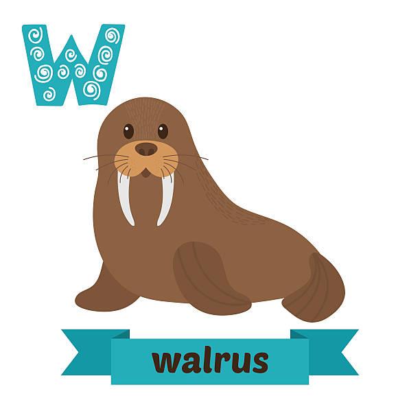 Best Walrus Illustrations, Royalty.