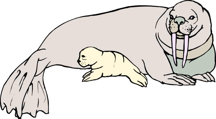 Walrus clipart 7.