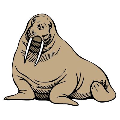 Free Walrus Clip Art 989A.