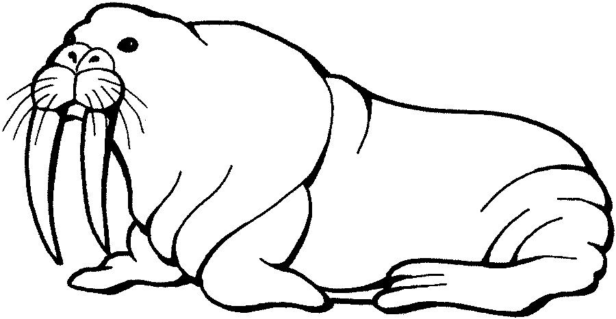 Walrus clipart free clipart images 2.