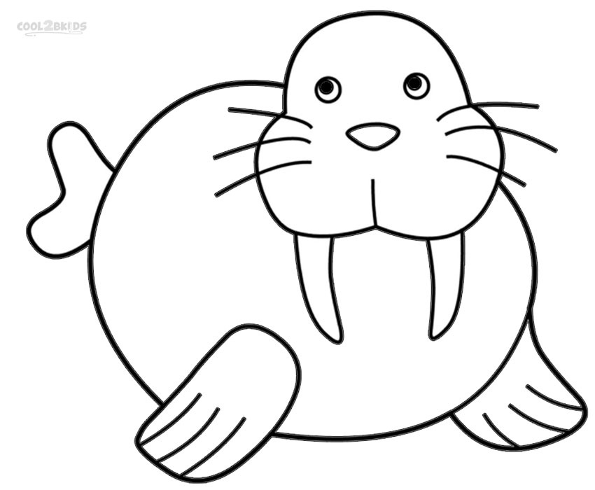 Free Walrus Pictures, Download Free Clip Art, Free Clip Art.
