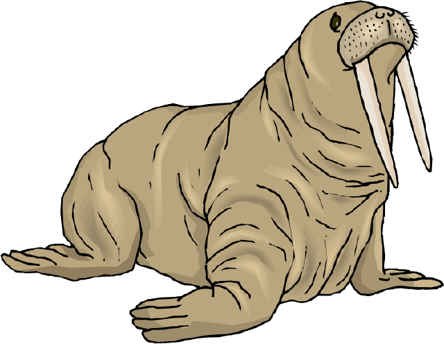 Walrus Clipart Free.