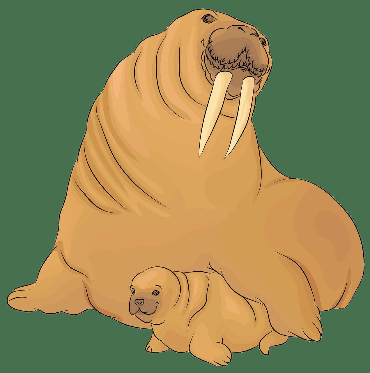 Walrus clipart christmas, Walrus christmas Transparent FREE.