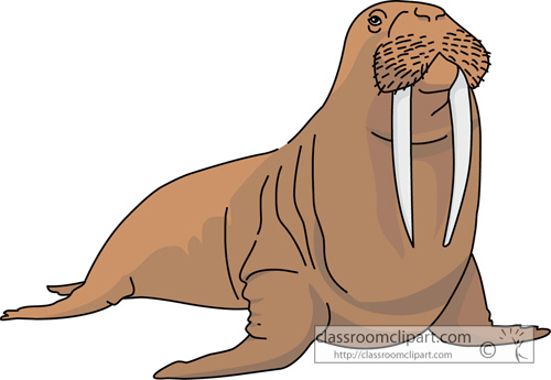 Walrus » Clipart Station.