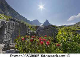 Alp laguz Stock Photo Images. 12 alp laguz royalty free pictures.