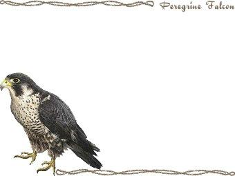 Peregrine Falcon clipart graphics (Free clip art.
