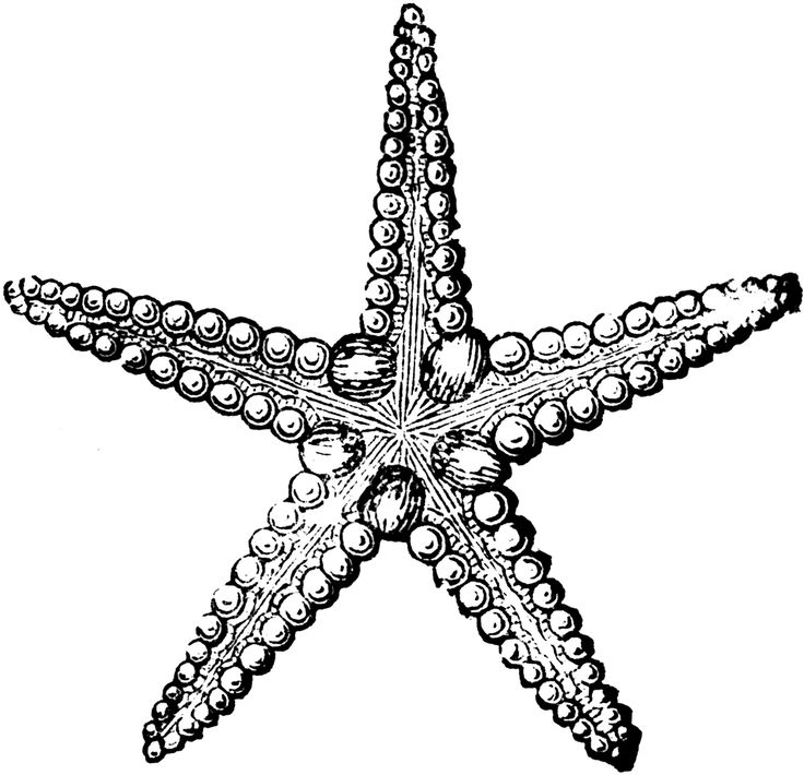 Starfish (ClipArt Etc..