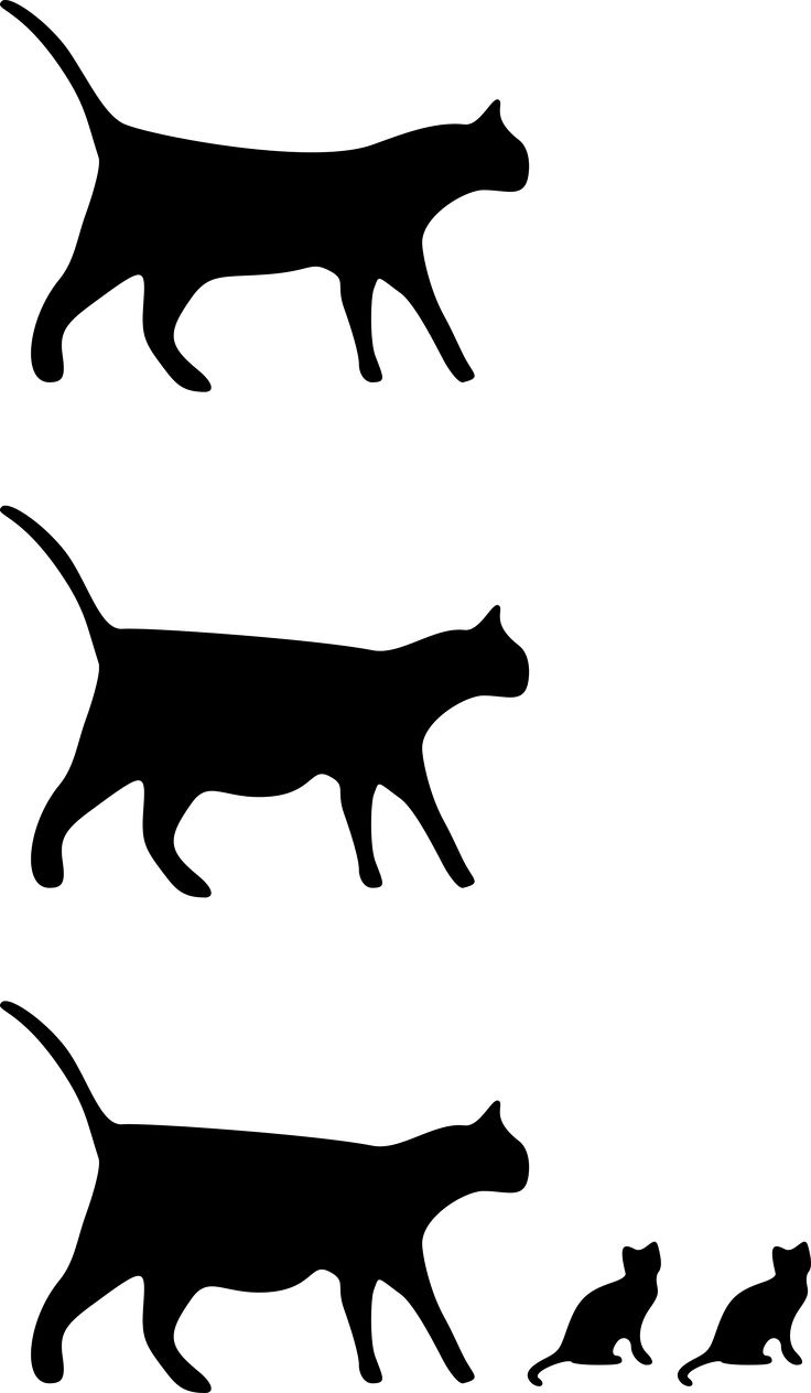 1000+ ideas about Cat Icon on Pinterest.