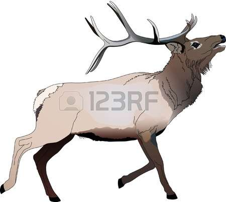 103 Wapiti Stock Vector Illustration And Royalty Free Wapiti Clipart.