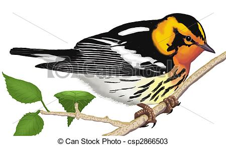 Dendroica Stock Illustrations. 30 Dendroica clip art images and.