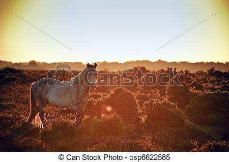 Stock Images of Stunning warm glow image of New Forest pony at.