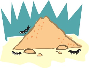 Preventing Ants from Entering Your Waltham Home.