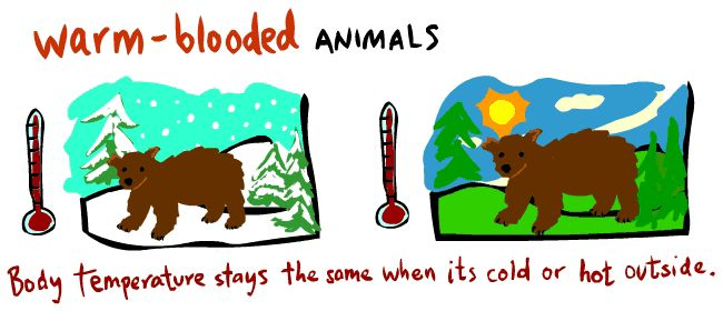 Warm blooded animals clipart.