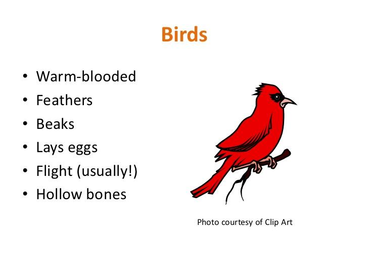 Animal classification.