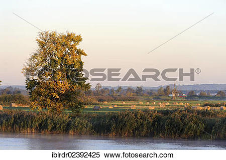 """Stock Image of """"Warta river, Warta River Mouth National Park, Park."""