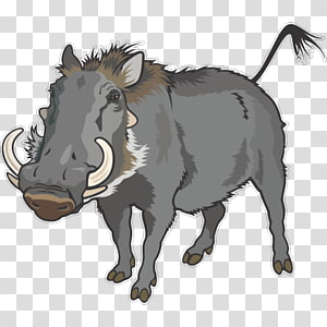 Warthog Cliparts transparent background PNG cliparts free.