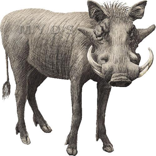 Clipart warthog.