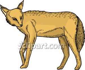Brown Fox.
