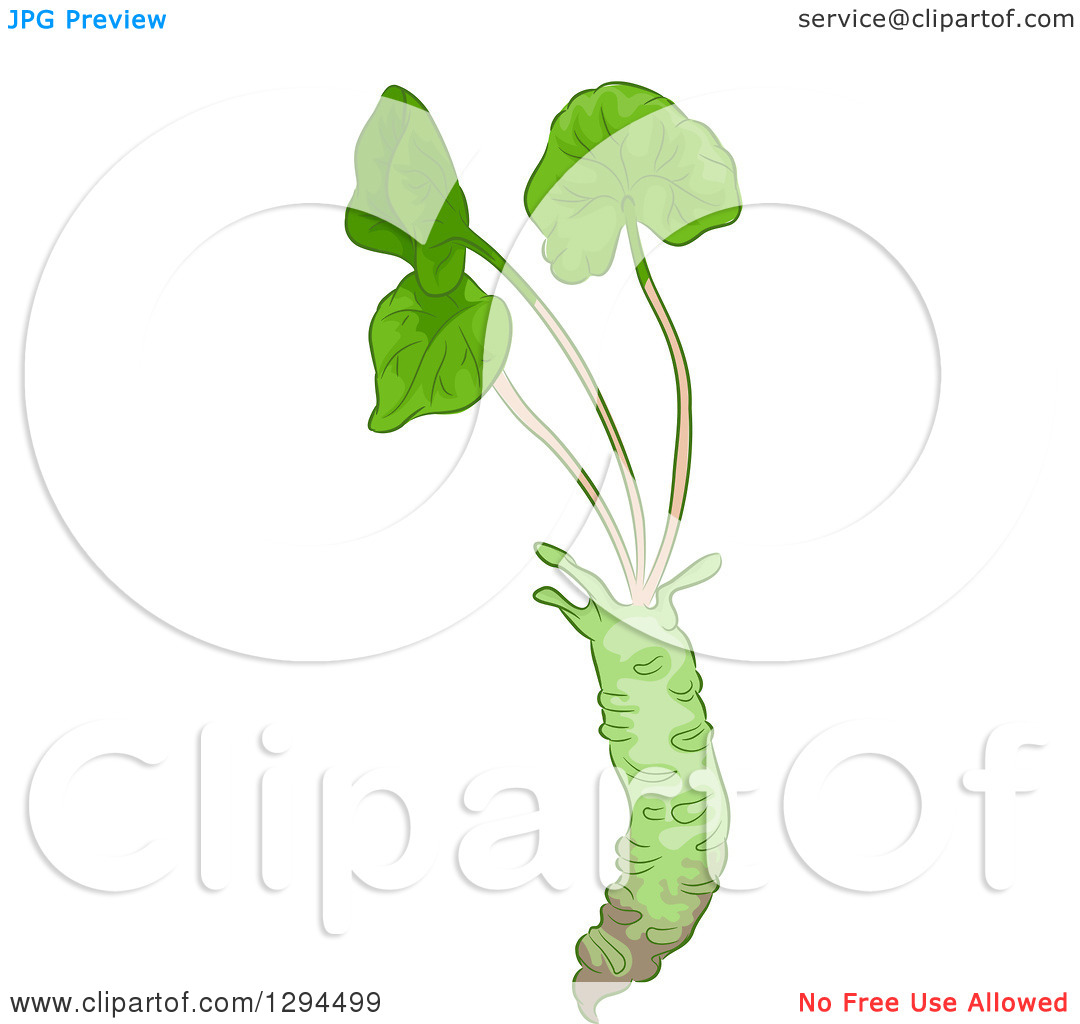 Clipart of a Wasabi Root with Greens.