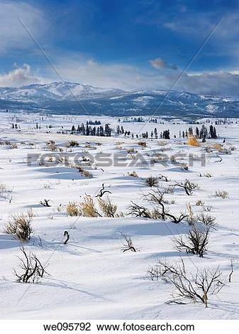 Stock Photo of Sagebrush on Blacktail Deer Plateau in winter with.