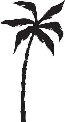 Palm Tree Royalty.