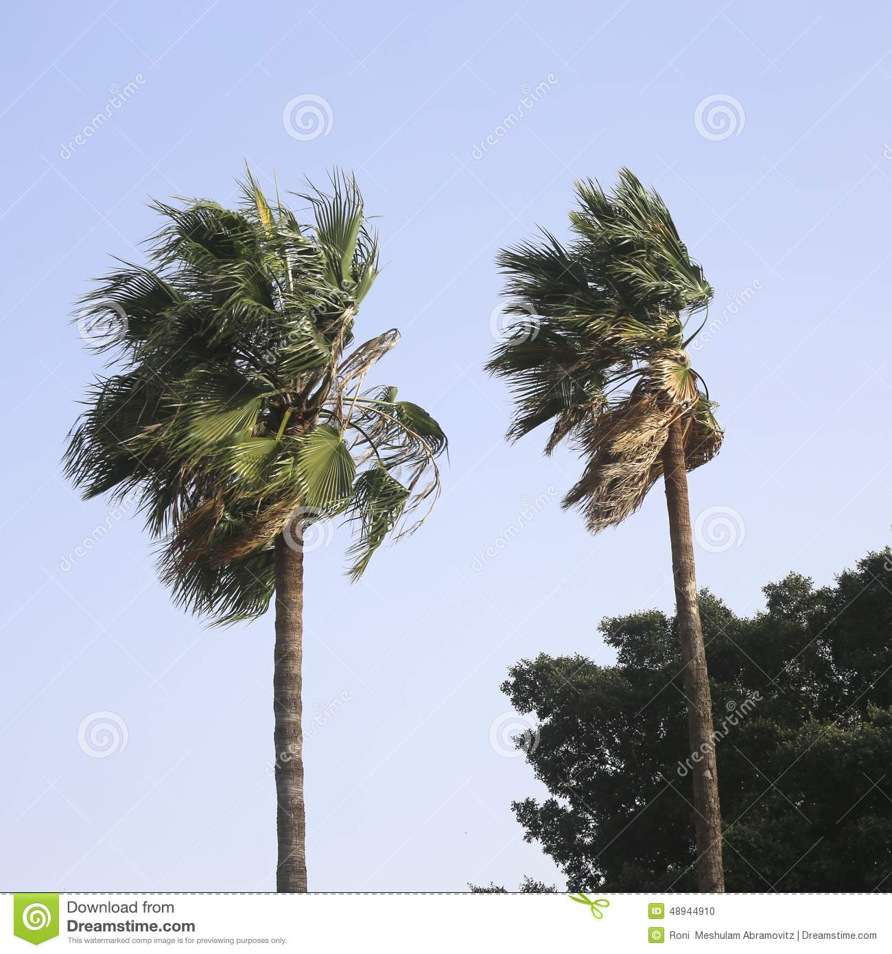 Blowing palm trees clipart.