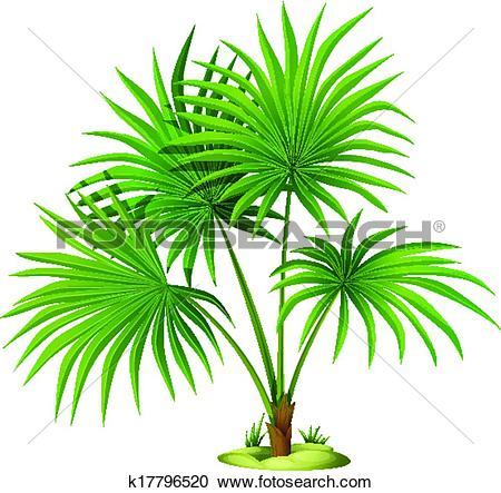 Clipart of Washingtonia robusta k17796520.