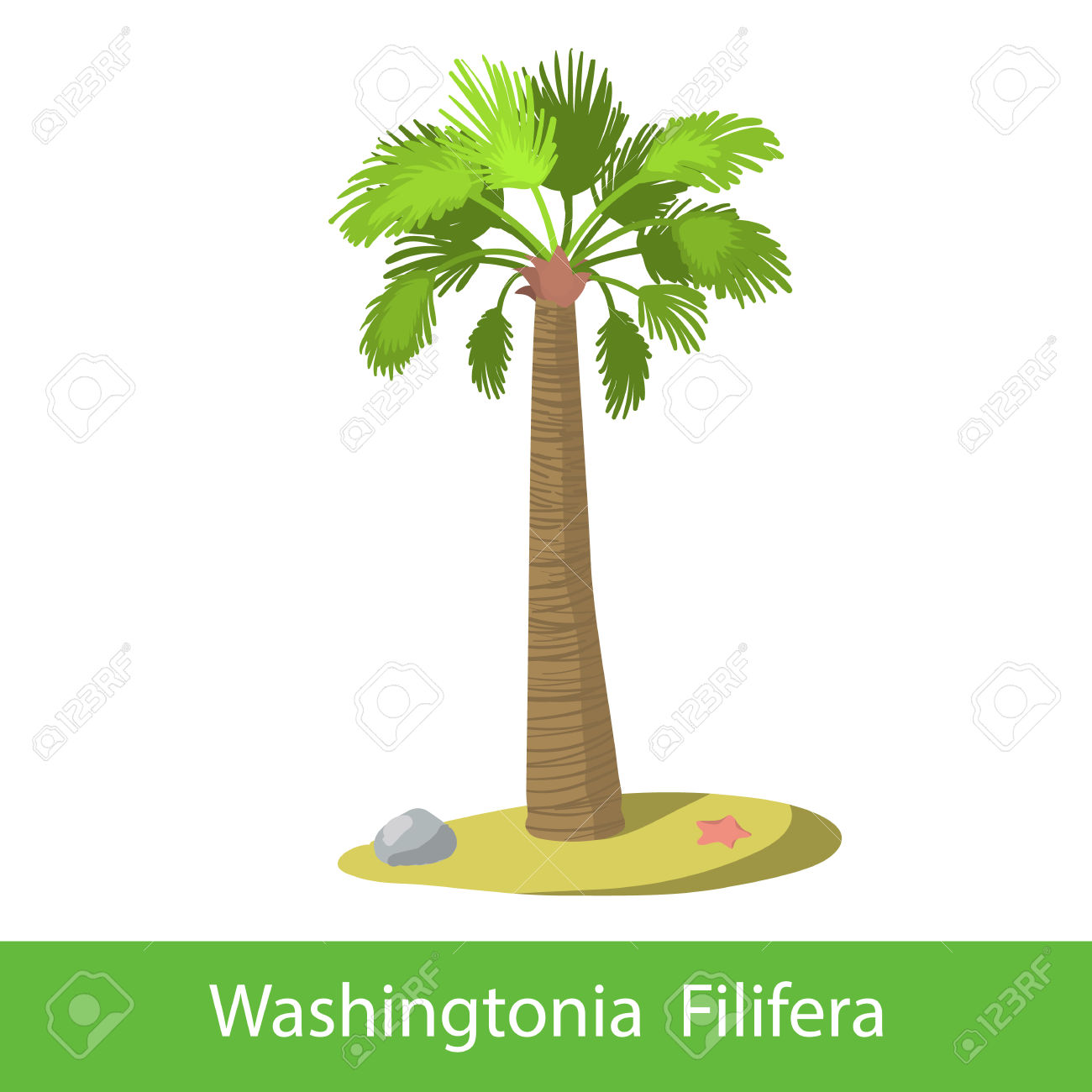 Washingtonia Filifera Cartoon Tree. Single Illustration On A.