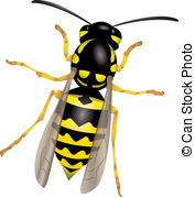Wasp Stock Illustrations. 2,534 Wasp clip art images and royalty.