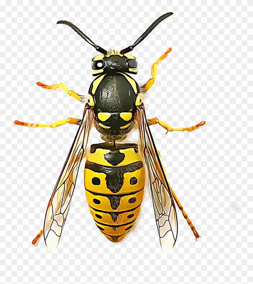 Yellow Jacket Png.