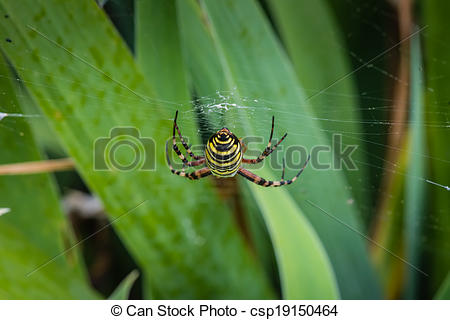 Stock Image of wasp spider butt.