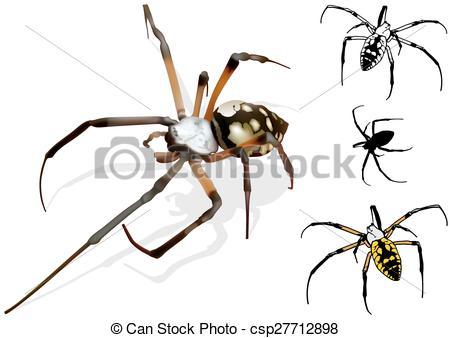 EPS Vectors of Wasp Spider (Argiope).