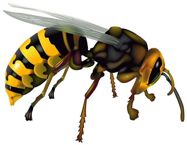 Wasp Fighting Clipart.
