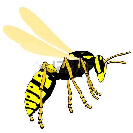 11,725 Wasps Stock Vector Illustration And Royalty Free Wasps Clipart.