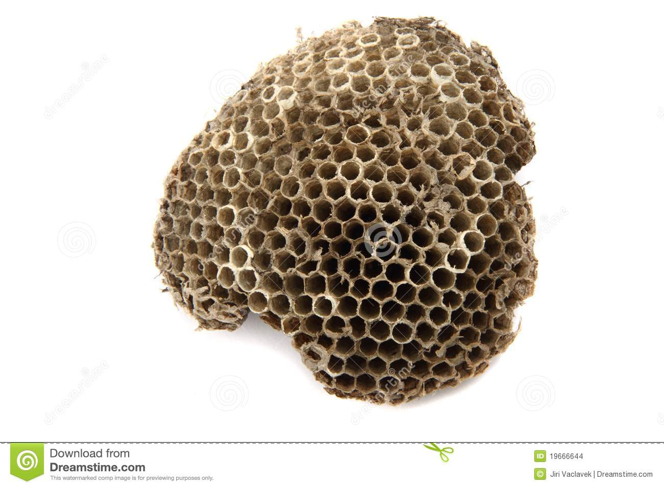 Wasp Nest Stock Images.