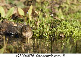 Wühlmaus Stock Photo Bilder 436 wühlmaus Lizenzfreie Bilder und.