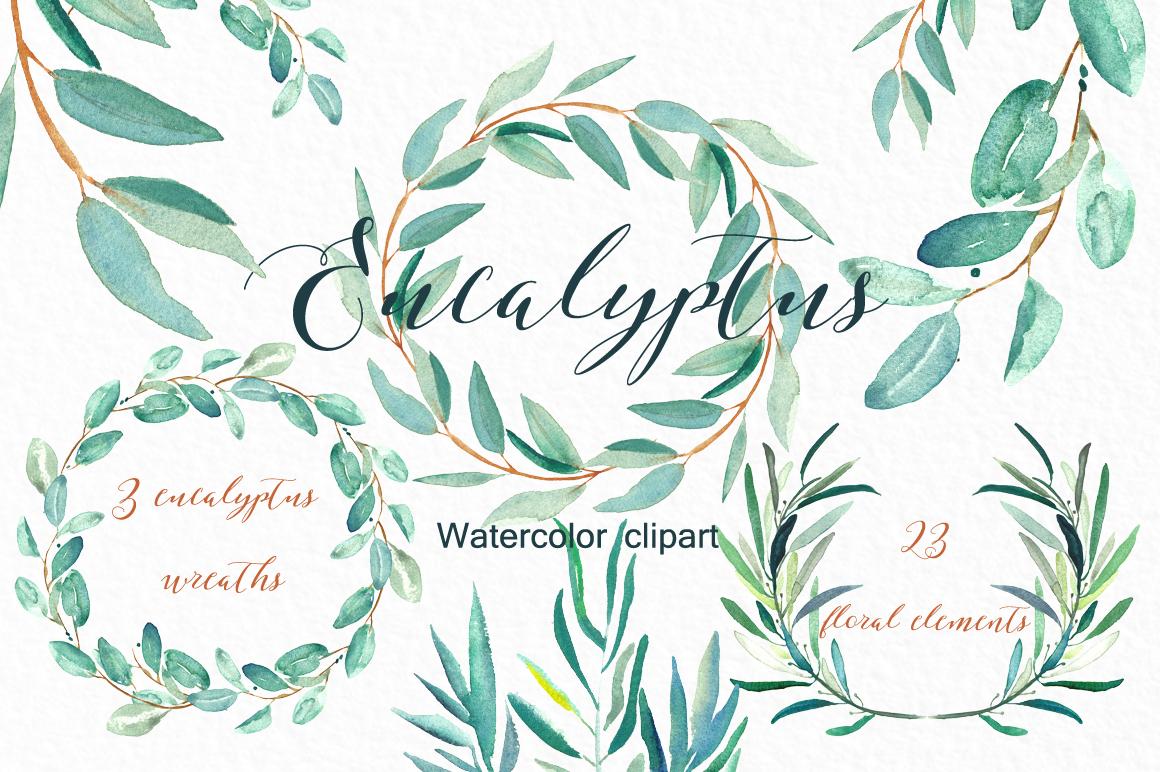 Eucalyptus Watercolor Clipart.
