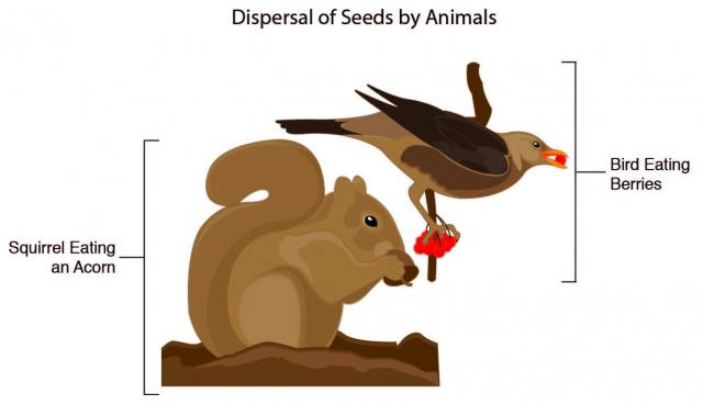 Showing post & media for Water seed cartoon.