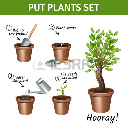 Putting And Growing Plants Instruction With Pots Water And Seeds.