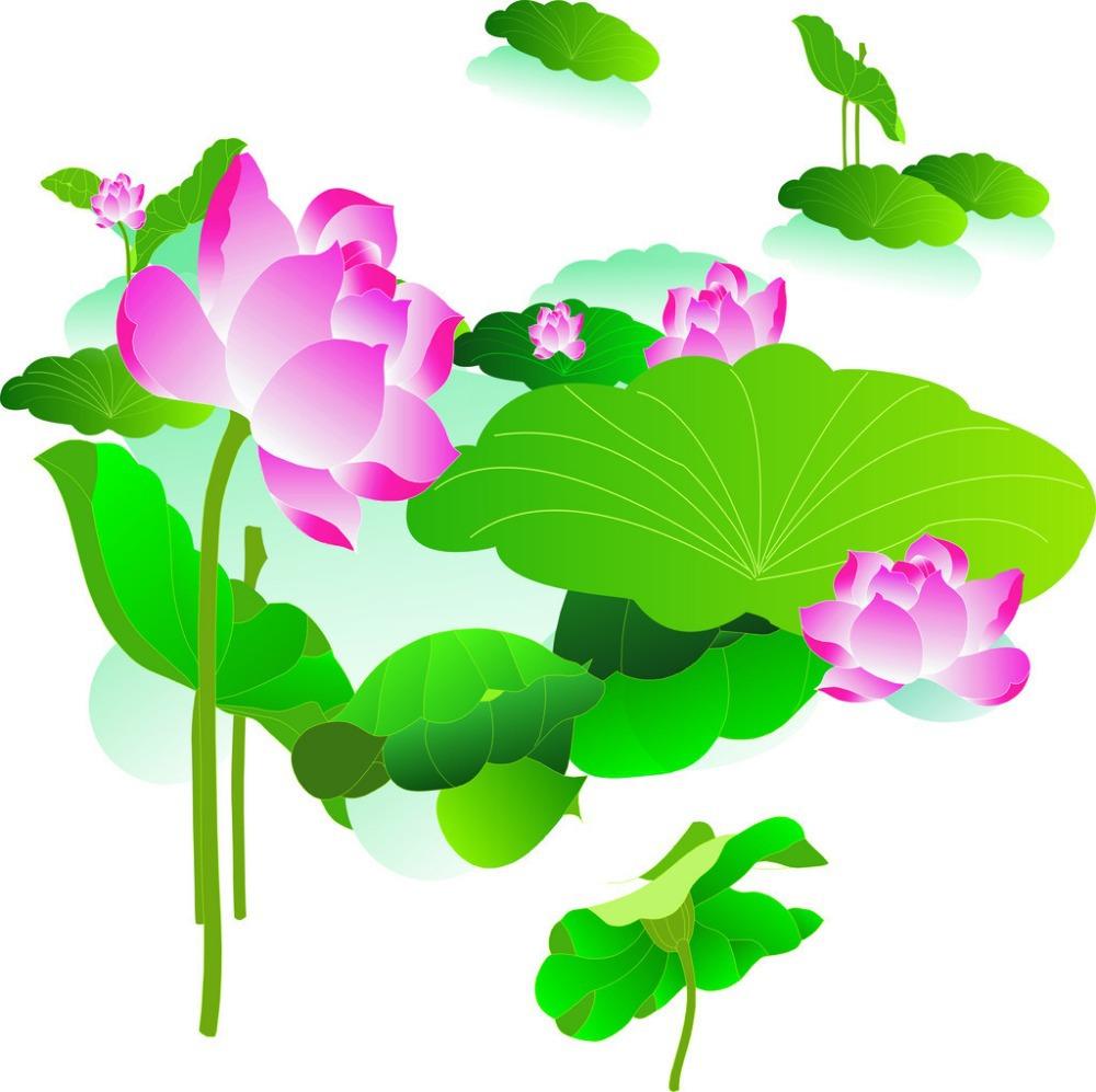 Aliexpress.com : Buy 20 pcs ( 20 kinds ) water lily Lotus seeds.