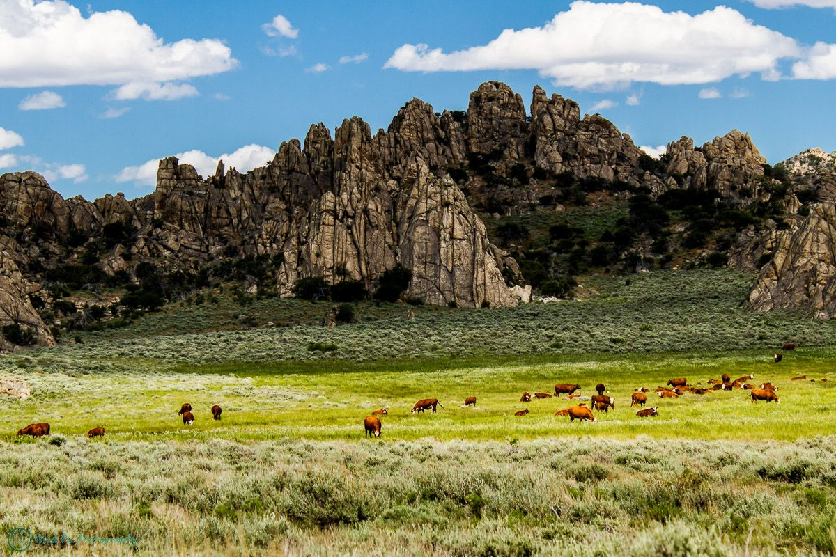 Grazing on Public Lands Still a Source of Controversy … and.