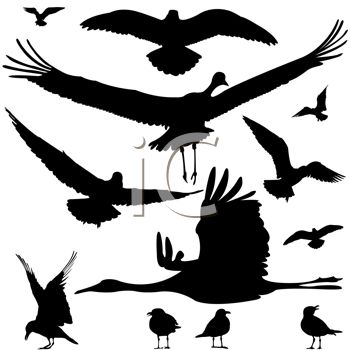 Silhouette of Different Kinds of Water Birds.