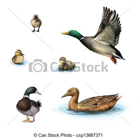 Water birds Illustrations and Stock Art. 9,648 Water birds.
