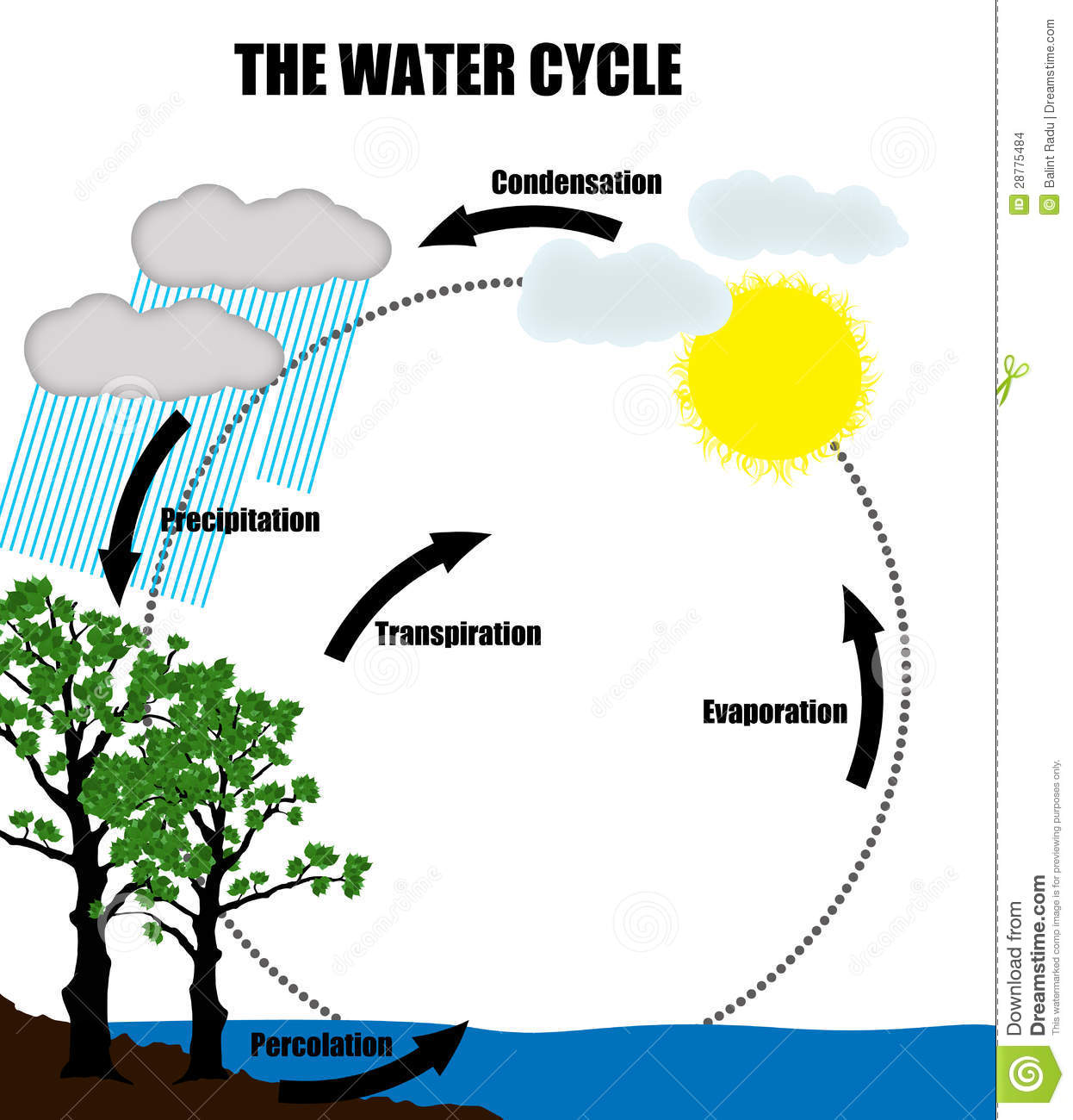 Schematic Representation Of The Water Cycle In Nature Stock Images.