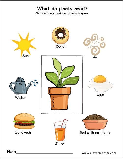 What plants need to grow worksheets for preschools.