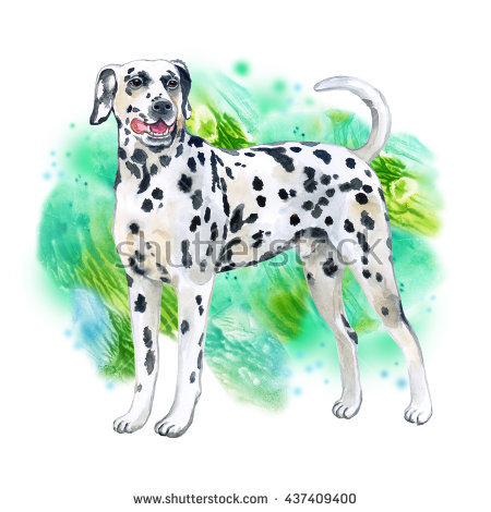 Watercolor Closeup Portrait Of Large Dalmatian Breed Dog Isolated.